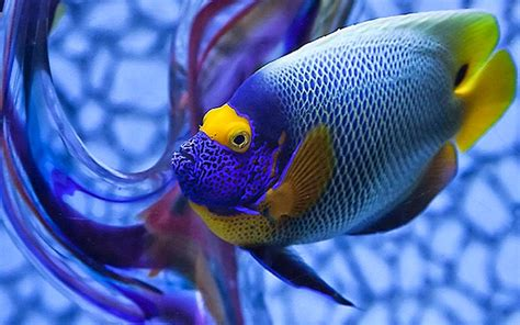 Banknotes and Coins: Photos colorful fish Accessories