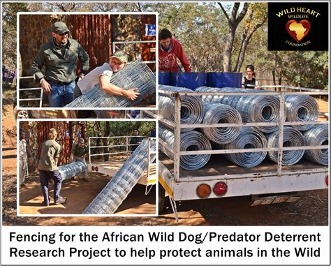 How Can You Help - Wild Heart Wildlife Foundation